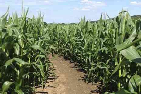 Maize Maze -  Entry For Two at Maize Maze - Save 50%