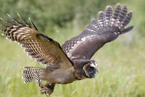 CJs Birds of Prey - Two Hour Birds of Prey Experience - Save 77%