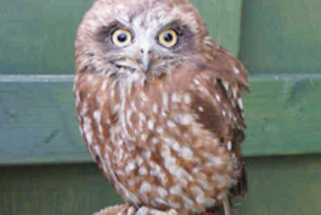 Scottish Owl Centre - One Day Weekday Pass to the Scottish Owl Centre - Save 40%