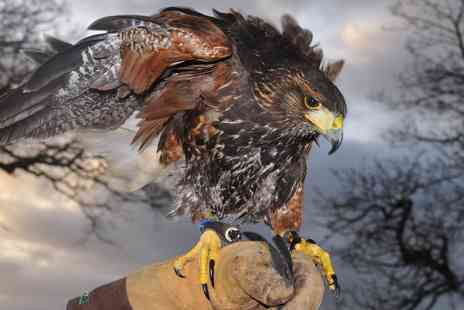 Battlefield Falconry Centre - Birds of Prey Flying Experience - Save 71%