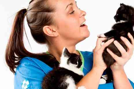 White Cross Vets - Pet Vaccination and Health Check - Save 50%