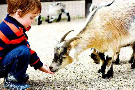 Old Macdonalds Farm - Day tickets for Old MacDonalds Farm in Essex with a petting zoo and rides - Save 37%