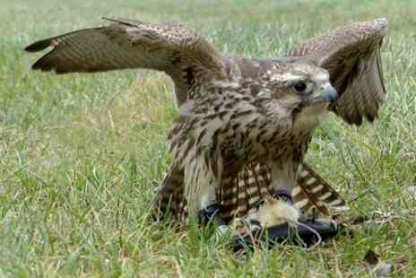 S & D Falconry - Two Hour Birds of Prey  Session  - Save 73%