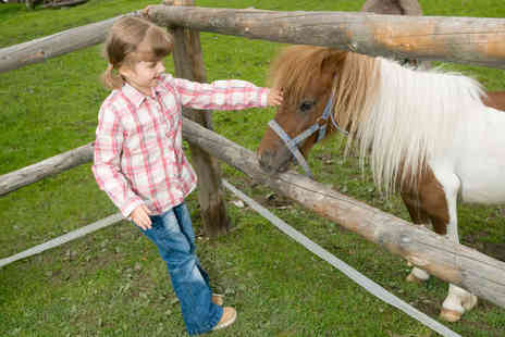 Ellenwhorne Equestrian Centre - Three Hour Play and Groom Pony Experience - Save 50%