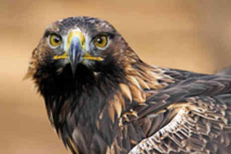 Forest Falconry - Four Hour Bird of Prey Digital Photography Experience - Save 60%