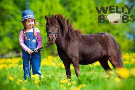 Wellybobs Farm Park -  Entry to Wellybobs Farm Park For Child and Adult Plus Child - Save 50%