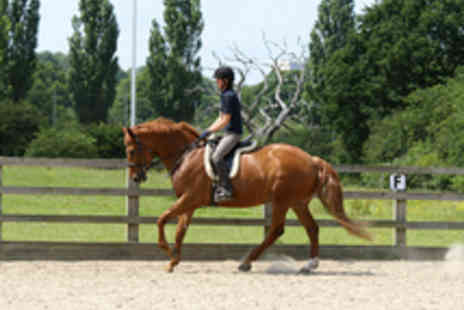 Trent Park Equestrian Centre - Half Day Equestrian Experience with Tea and Cake - Save 63%
