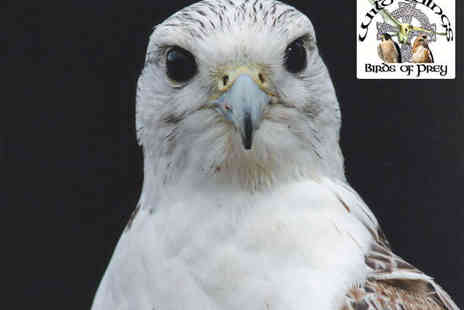 The Wild Wings Birds of Prey Centre - Junior Meet the Birds Experience with One Adult  - Save 52%