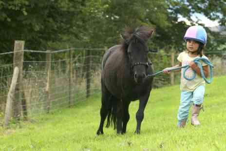 Lee Hill Riding School - Childrens Pony Care and Riding Experience - Save 50%