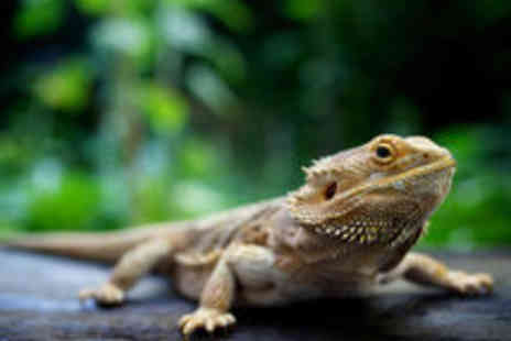 Paradise Wildlife Park - Indoor Reptile and Bug Bonanza Experience Including General Admission - Save 40%