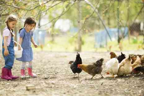 Highfields Happy Hens - Family Farm Day With Lunchboxes, Animal Feed and Crazy Golf - Save 64%
