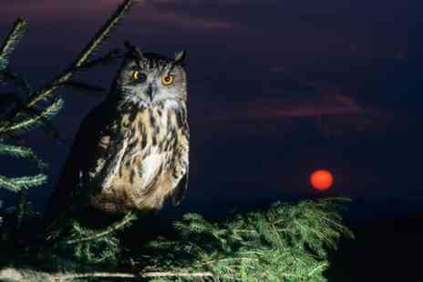Bridlington Birds of Prey & Animal Park - Ticket to Spooky Nighttime Owl Walk - Save 30%