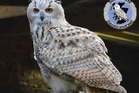 Scottish Owl Centre - Entry to General Admission to the Scottish Owl Centre With  to Winter Wonder Owls Show - Save 47%