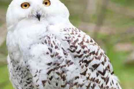 Rutland Falconry and Owl Centre - Two Hour Hawk or Owl Experience - Save 75%