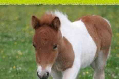 Mountjoy Stables - Pony Handling Experience - Save 64%