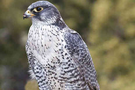 York Bird of Prey Centre - Entry to York Bird of Prey Centre for One Adult and One Child - Save 54%