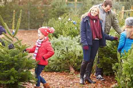 Trinity St Christmas Trees - £10 Towards a Christmas Tree, With Hot Chocolate and Mince Pie For Four  - Save 0%