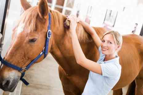 Tumpy Green Equestrian Centre - Riding Lesson and Horse Grooming - Save 72%