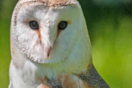 North Somerset Bird of Prey centre - Birds of Prey Experience with a Cream Tea for One - Save 58%