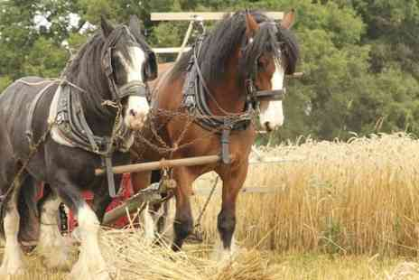 Hawkforce Falconry Experience Days - Shire Horse Dray Ride and Cream Tea - Save 80%