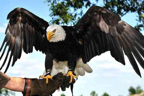 Eagle Heights -  Entry to Animal Sanctuar Eagle Heights - Save 44%