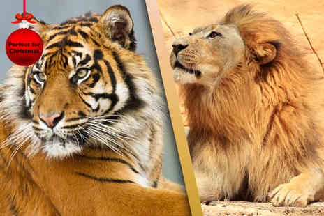 Chessington World of Adventures - Trail of the Kings big cat experience including zoo and theme park entry  - Save 43%