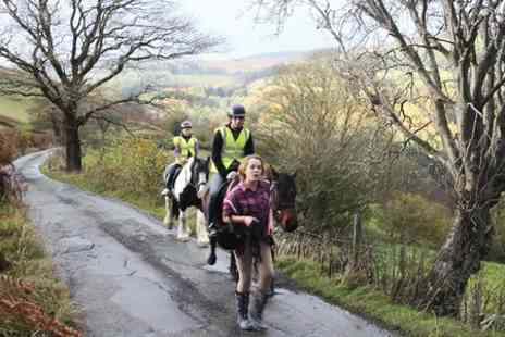 Ceffyl Gwyn Stables - Horse Riding Lesson and Trek For One - Save 0%