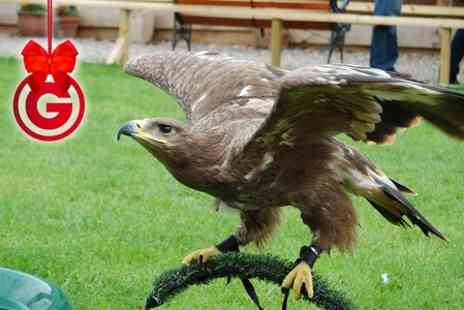 Battlefield Falconry Centre -  Birds of Prey Experience  - Save 75%