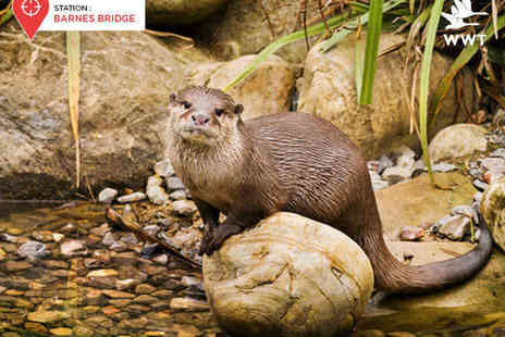 WWT London Wetland Centre - Tickets to WWT London Wetland Centre for Two Adults - Save 43%