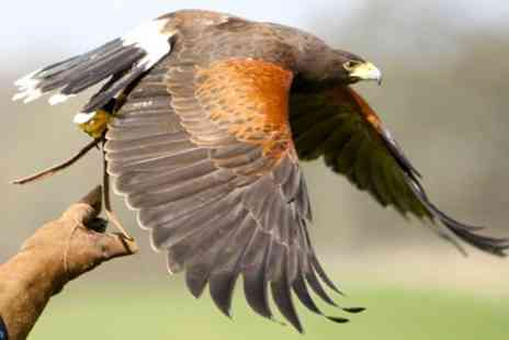 The Hawk Garden - Two Hour Hawk Walk Experience - Save 81%