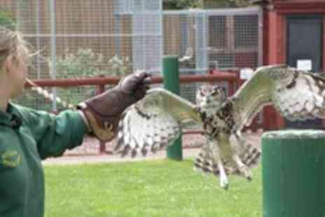Gentleshaw Wildlife Centre - Fascinating Falconry Experience for One  - Save 71%