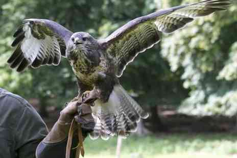 Falconry Days - Half Day Birds of Prey Flying Experience - Save 63%