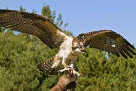 Gyrs International Falconry - Half Day Falconry Experience - Save 67%