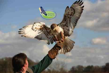 Raptor World - Two hour Bird of Prey experience  - Save 59%