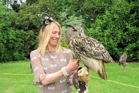 Predator Power Falconry - Three hour Meet the Birds experience for one  - Save 68%
