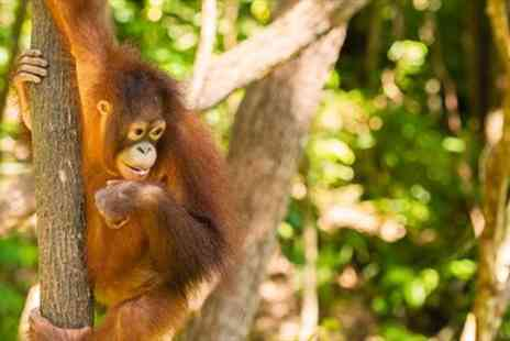 The Great Projects - 13 Night Orangutan & Tribes Tour  - Save 27%