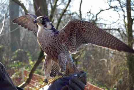 Bird on the hand - Three Hour Falconry Experience - Save 53%