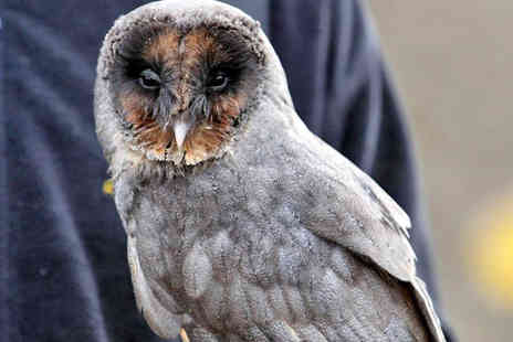Falconry Experiences - An Evening with Owls Bird Handling Experience - Save 50%