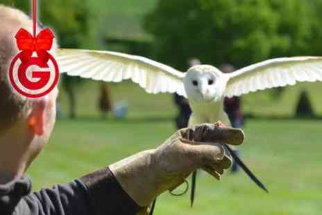 Feather Perfect Falconry CIC - Owl Experience For One - Save 58%