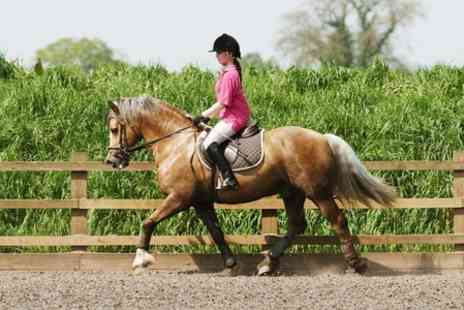 Holme Farm Equestrian Centre - Semi Private Riding Lesson  - Save 55%