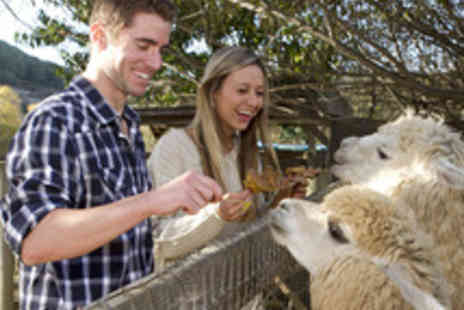 Alpaca Annie - Alpaca Trekking Experience for Two  - Save 50%