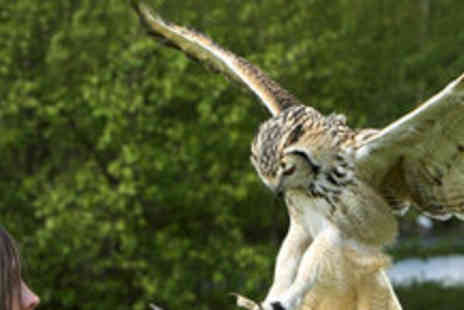 The English School of Falconry - Bird of Prey Experience - Save 81%