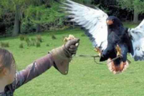 Phoenix Falconry - 3.5 Hour Bird of Prey Experience - Save 55%