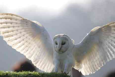Hawks Of Steele - Owl or Falconry  Experience - Save 66%