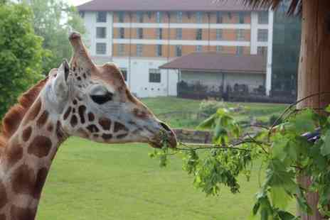 Chessington World of Adventures - Giraffe safari experience and theme park entry - Save 42%
