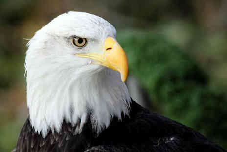 Birds of Prey Centre - Half day eagle handling experience for one - Save 76%