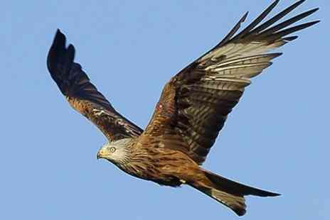 Argaty Red Kites - Red Kite Hide Experience For Two  - Save 50%