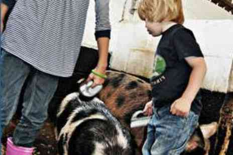 Stockley Farm - Family Admission to Stockley Farm Park - Save 52%