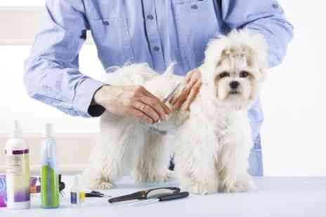 Holly and Hugo - Accredited Online Dog Grooming Course  - Save 89%