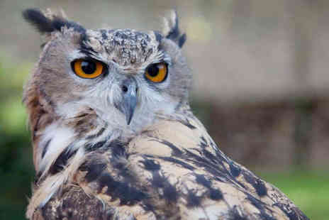 North Somerset Bird of Prey Centre - Owl Experience for One  - Save 58%